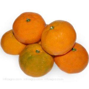12383-i2-mandarinas-ecologicas